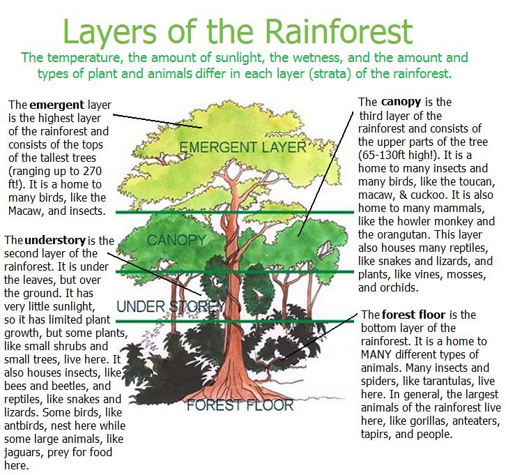 Unit Overview Human Society Its Environment Portfolio – Rainforest Layers Worksheet